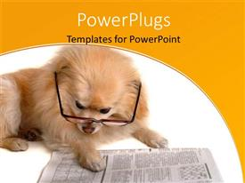 Presentation with hairy dog with eye glasses reading pages of newspaper