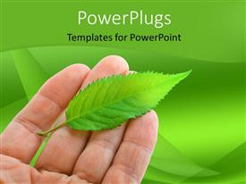 Beautiful presentation theme with hand holding fresh green leaf over green background