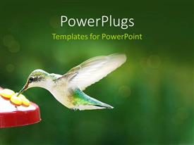 Presentation theme with hummingbird eating from feeder, green background