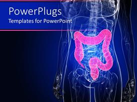 Colorful PPT layouts having inside of human body in dark blue with colon highlighted in pink