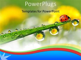 Presentation design with ladybug on green plant stem withwater drops from morning dew