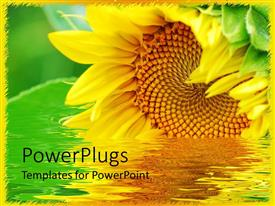 Amazing PPT layouts consisting of large beautiful sunflower on a river with green background
