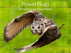 Audience pleasing PPT theme featuring large brown Owl flying off green brick wall