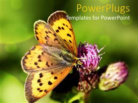 Colorful presentation theme having a large butterfly resting on a purple flower with blurry background