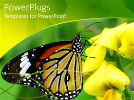 PPT theme consisting of large colorful butterfly with yellow flowers and green background