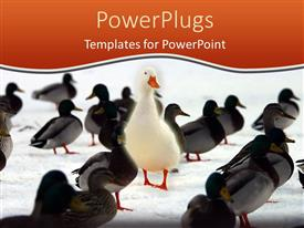PPT theme enhanced with large distinct white bird stands out from the crowd