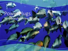 Theme consisting of large group of swimming fishes in blue water underwater life