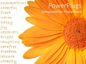 Colorful PPT layouts having a large orange colored flower on a white background