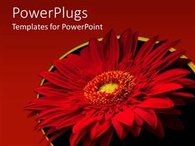 PPT theme with large red flower with red and black colored background
