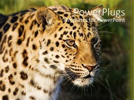 Amazing PPT theme consisting of leopard face with blurred green background, animal