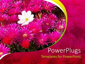 Elegant presentation theme enhanced with a lot of flowers with pinkish background