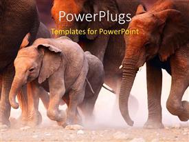 Elegant presentation enhanced with lots of elephants walking on a dusty dry road