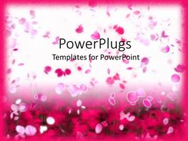 Theme enhanced with lots of pink colored flower petals floating on a white background