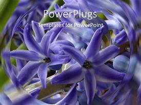 Elegant slides enhanced with lots of purple flowers with a swirling blurry background