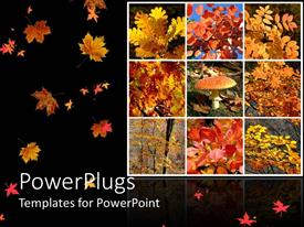 PPT layouts consisting of lots of tiles with dried autumn leaves and black background