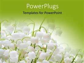 Theme enhanced with lots of white colored lily flowers on a green background