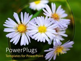 PPT theme featuring lots of white flowers blossoming on a green background