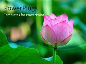 Presentation theme featuring lotus flower beside a green leaf with green blur