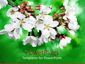 Colorful PPT layouts having lovely white and yellow flowers with blurry green background
