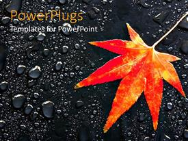 Slide set having maple leaf on rain drops orange and yellow leaf on asphalt
