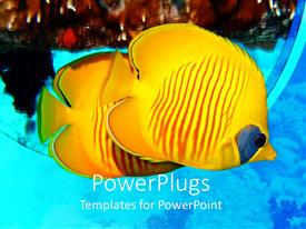 Presentation theme enhanced with masked Butterflyfish yellow tropical fish in sea, ocean, coral, scuba diving