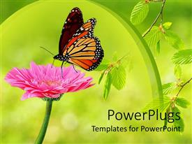 PPT theme featuring monarch butterfly landing delicately on pink flower