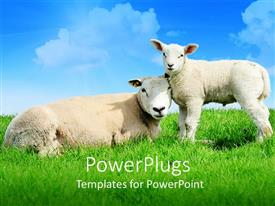 Beautiful presentation theme with mother sheep lying next to standing lamb