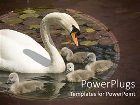 Theme enhanced with mother swan with her babies playing in lake filled with water lilies