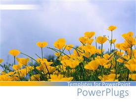 Presentation having multiple yellow flowers planted in garden under blue sky