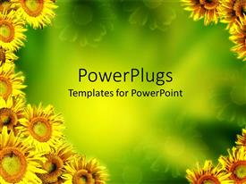 Amazing PPT theme consisting of multiple yellow sunflowers on edges with green background at center