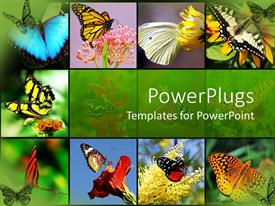 PPT theme featuring nine tiles with lots of colorful butterflies on them