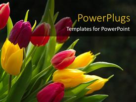 Audience pleasing theme featuring a number of colorful flowers with blackish background