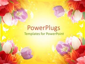 Audience pleasing presentation featuring a number of colorful flowers with place for text in the middle