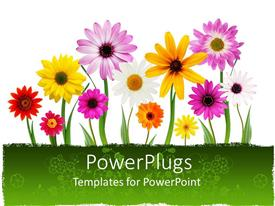 Elegant PPT layouts enhanced with a number of colorful flowers with white background