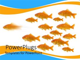 Elegant slides enhanced with a number of fish together with white background