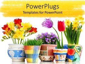Amazing PPT theme consisting of a number of flower pots in colorful form and white background
