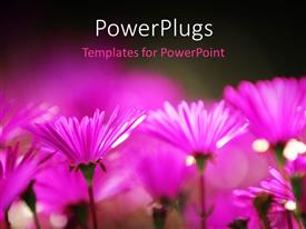 Presentation consisting of a number of flowers with blurr background
