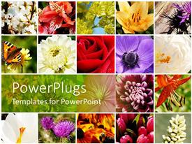 Beautiful PPT theme with a number of flowers of different colors