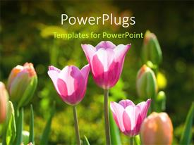 PPT theme consisting of a number of flowers with greenery in the background