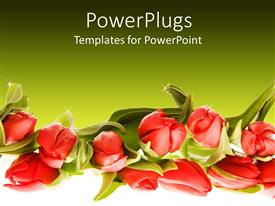 Presentation theme consisting of a number of flowers with greenish background