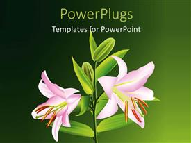 Elegant PPT theme enhanced with a number of flowers on a plant and greenish background