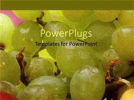 Theme with a number of fresh grapes with pinkish background