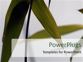 Amazing presentation design consisting of a number of leaves with grayish background