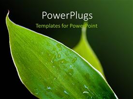 Theme having a number of leaves with water droplets and greenish background