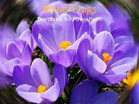 Theme enhanced with a number of purple flowers together