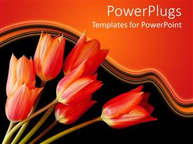 Colorful PPT theme having a number of red tulips with orange background