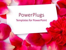 Colorful PPT theme having a number of rose petals with a page