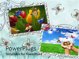 Beautiful PPT theme with a number of roses with greenish background