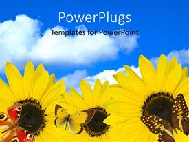 Elegant presentation theme enhanced with a number of sunflowers with clouds in the background