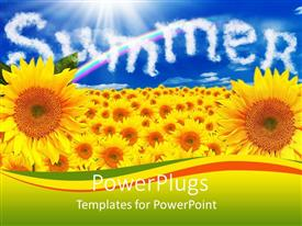Beautiful presentation theme with a number of sunflowers with the word summer in the background